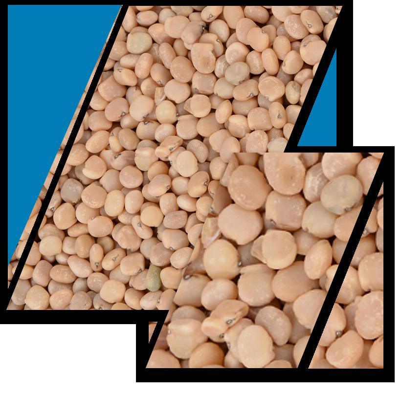 Guar-Seed-Slider